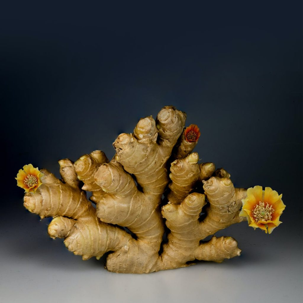 Ginger : Plant As Medicine