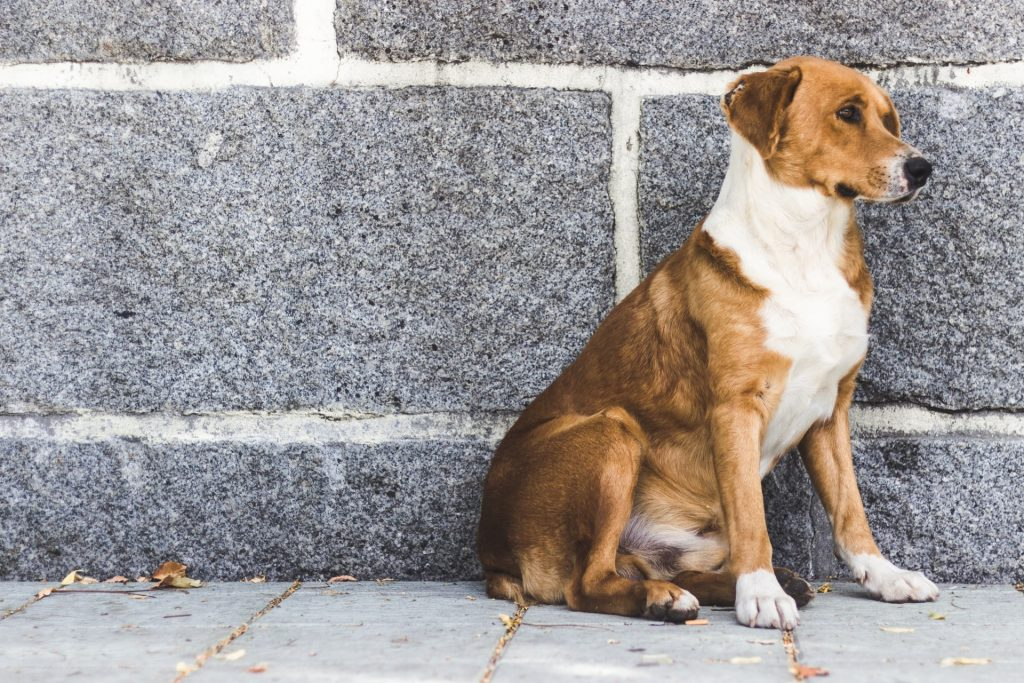 tame a stray dog