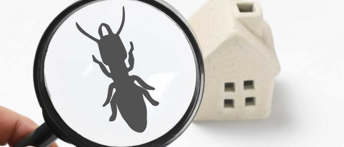 Termite Problem In Your Home